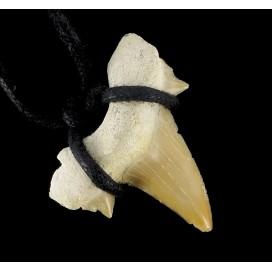 Diente de Tiburon fosilizado.